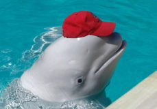 Сочинский дельфинарий в Адлере