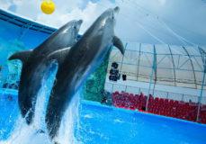 Сочинский дельфинарий «Ривьера»